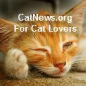 CatNews.org
