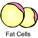 Fat Cells - hCG Diet Plan